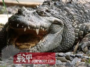 463.com永利皇宫 12
