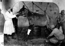 1950年美军装备展示