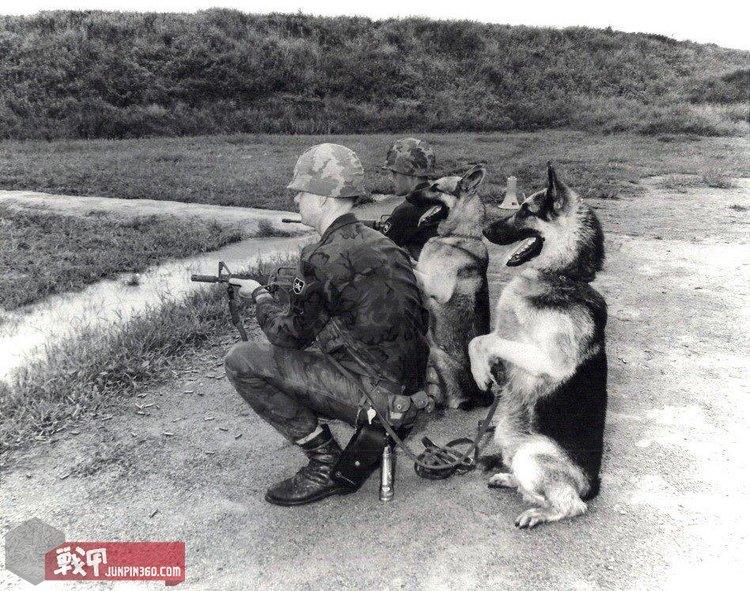 警戒中的空军宪兵和他们的军犬.jpg