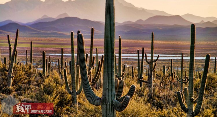 Saguaro_0.jpg